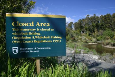 whitebait fishing regulations